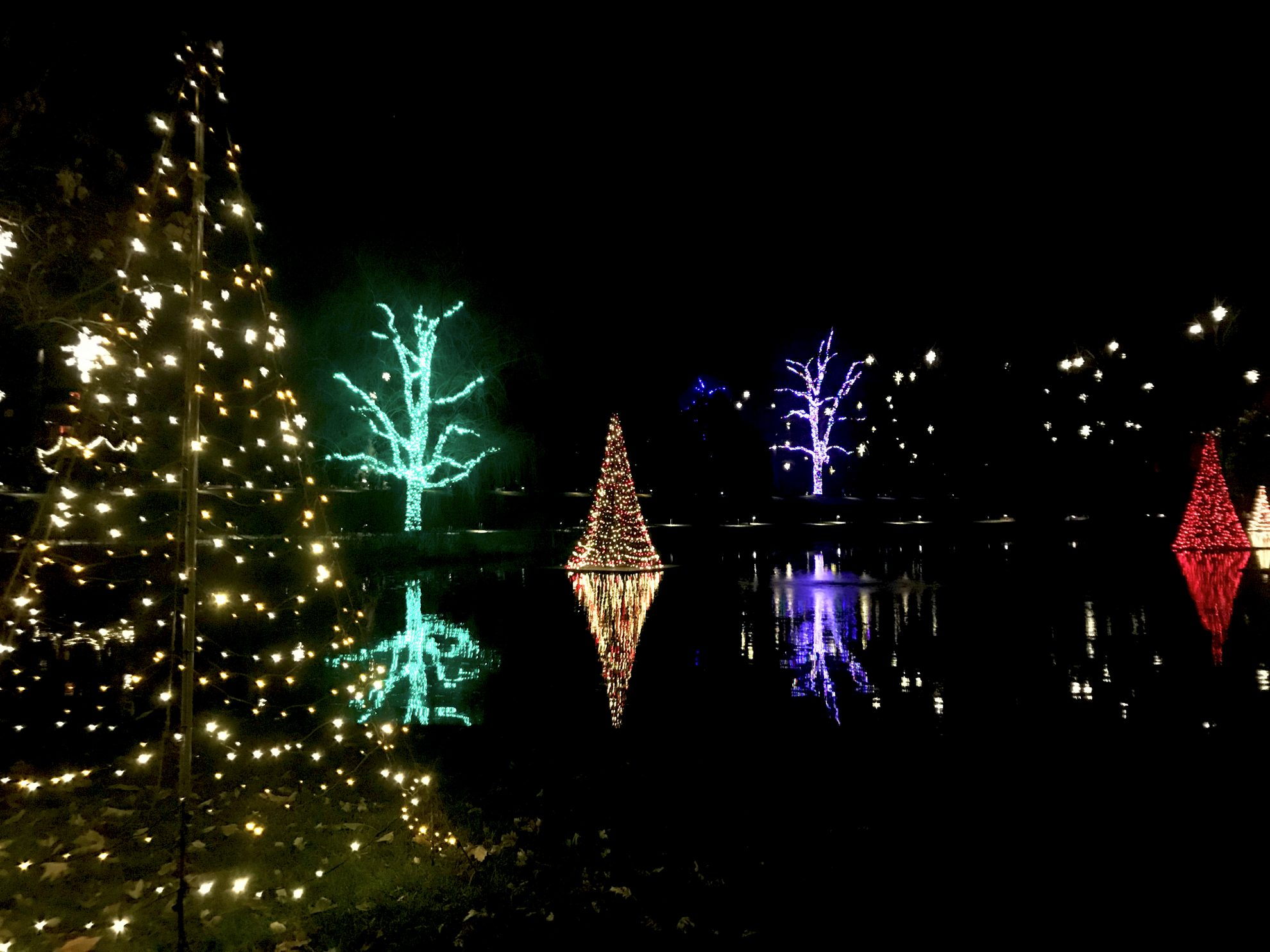 Longwood Gardens Holiday Lights with colorful, lighted trees
