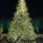 Sparkling Lights, Shining Bright: Holiday Trip to Longwood Gardens