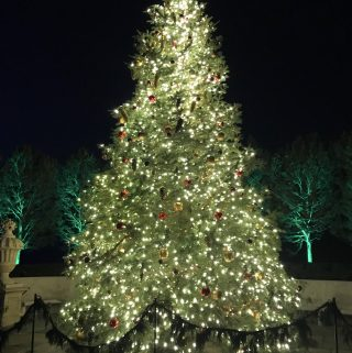 Beautiful and sparkling Longwood Christmas tree
