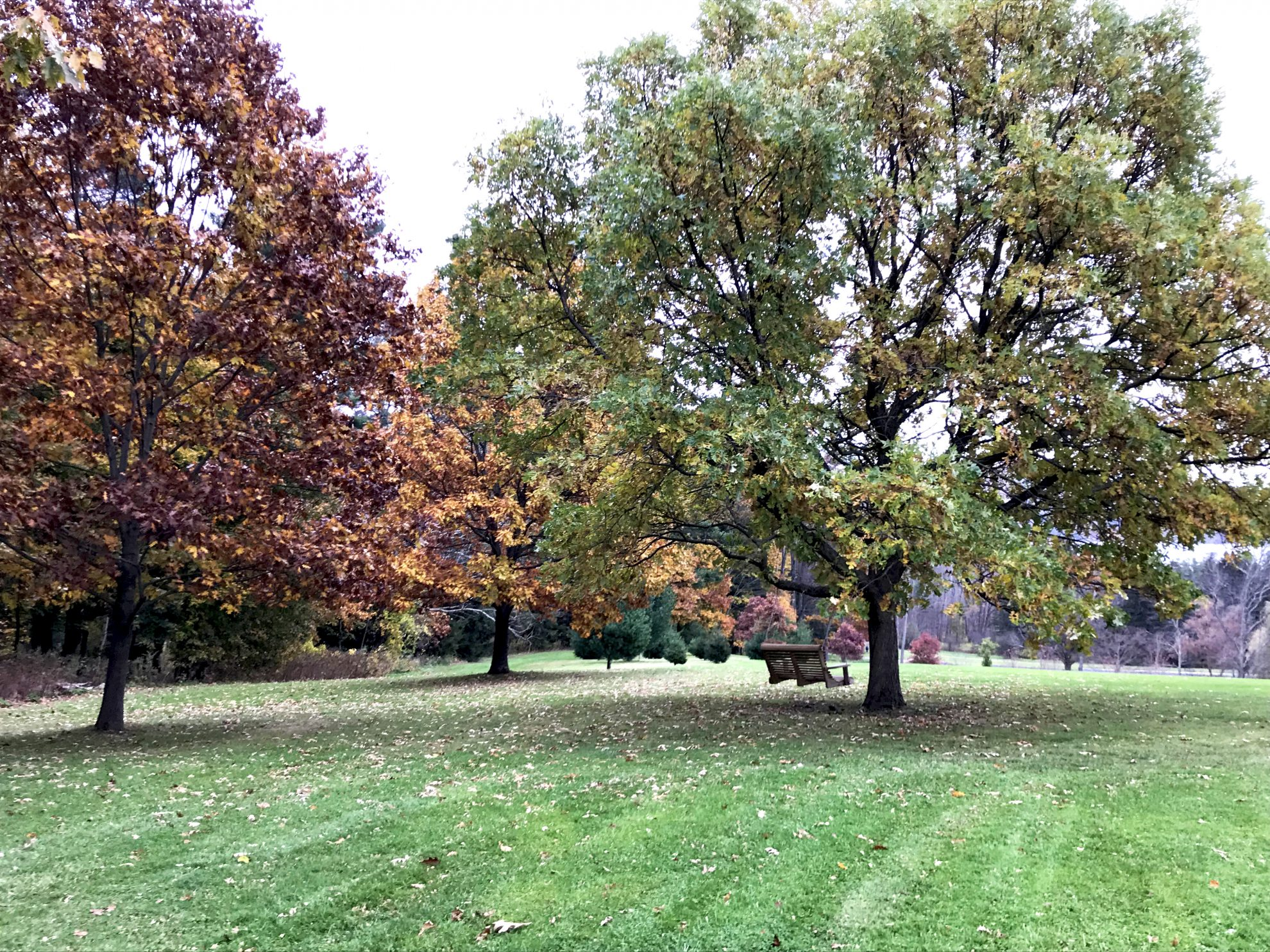 Beautiful red, yellow, and green autumn trees part of a transformative day at Kripalu Center for Yoga and Health