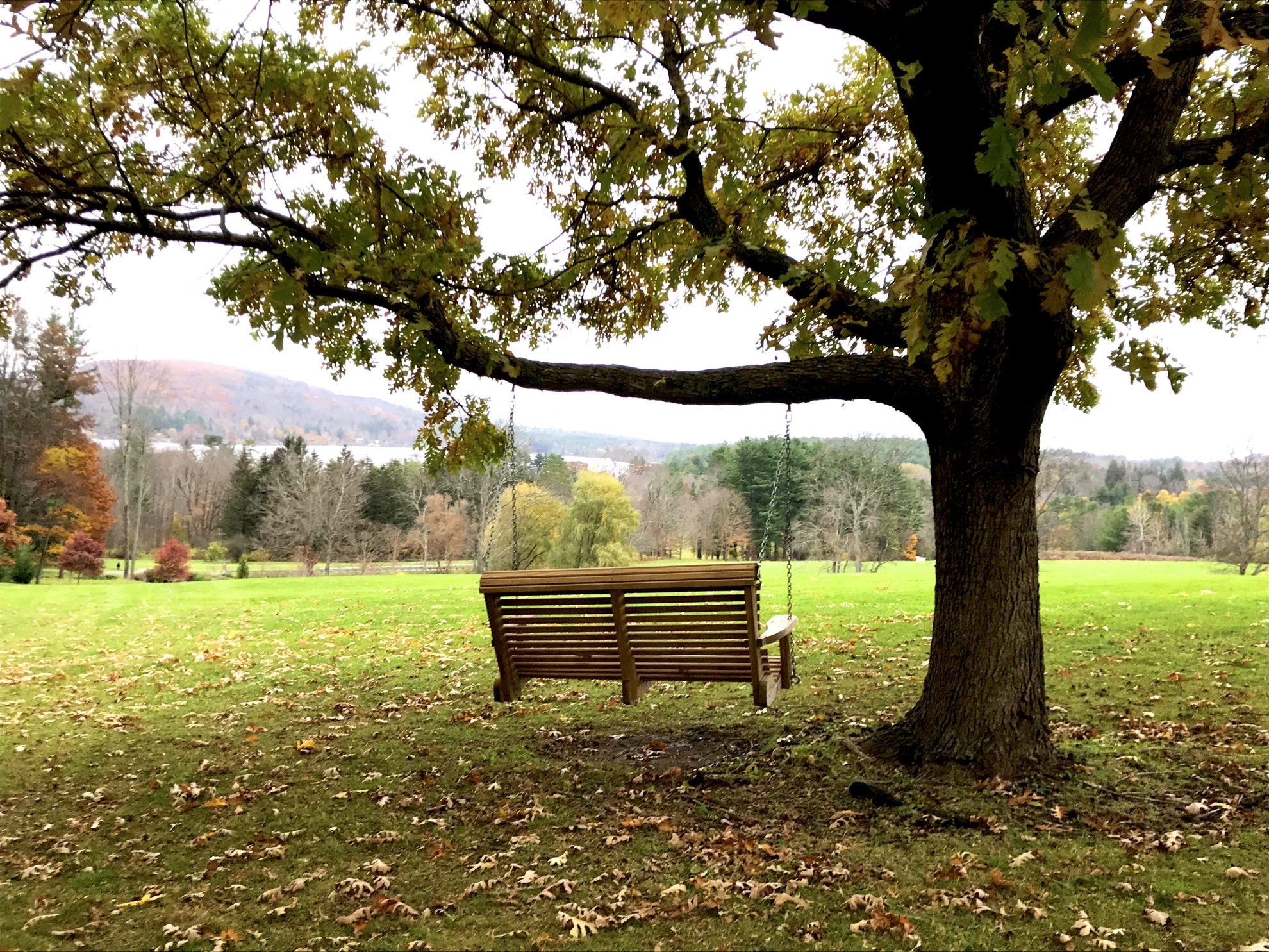 Serene tree swing overlooking the gorgeous and colorful view at Kripalu Center for Yoga and Health