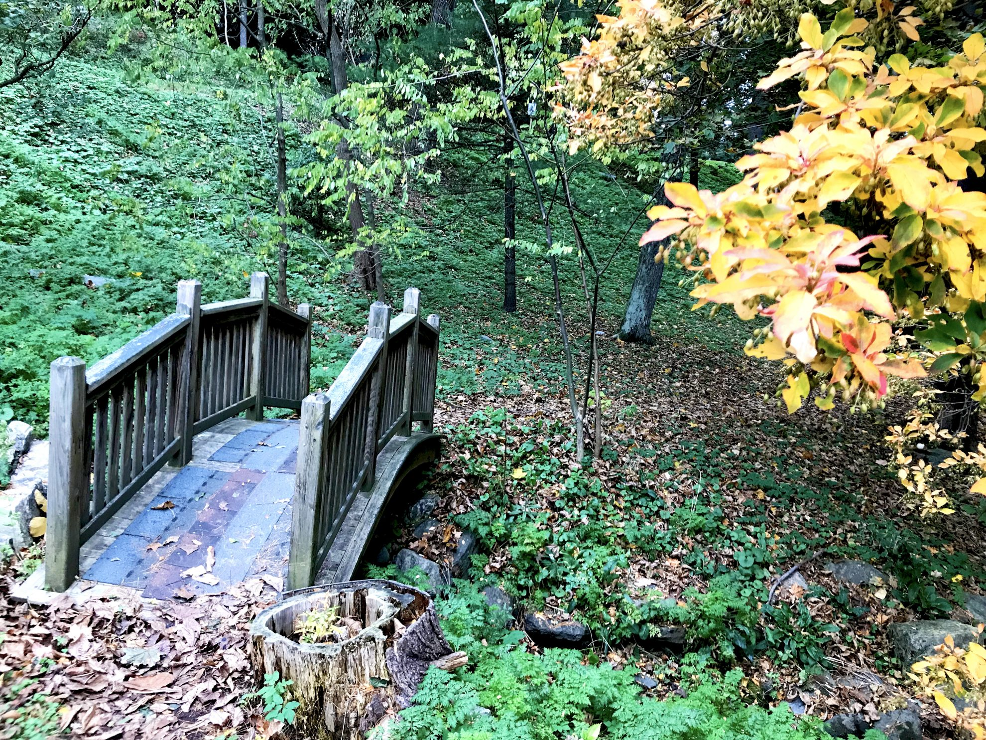 Bridge and trees that open out onto the hiking trail at Kripalu Center for Yoga and Health